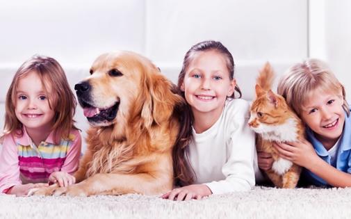 Bebekli Evde Kedi ve Köpek Beslemek